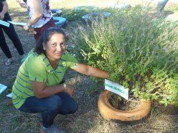 CRAS de Lagoa está cultivando Horto de Plantas Medicinais