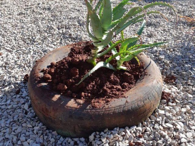 Sobre plantas medicinais🌿🌱🌾
