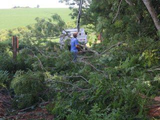 Secretaria de Obras realiza podas de árvores no interior